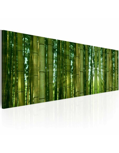 Tableau Panoramique - Canvas print - Bamboo in the sunshine